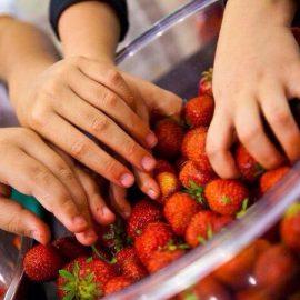 Video: Inhaber der Apotheke Oberalm kochen mit Kindern